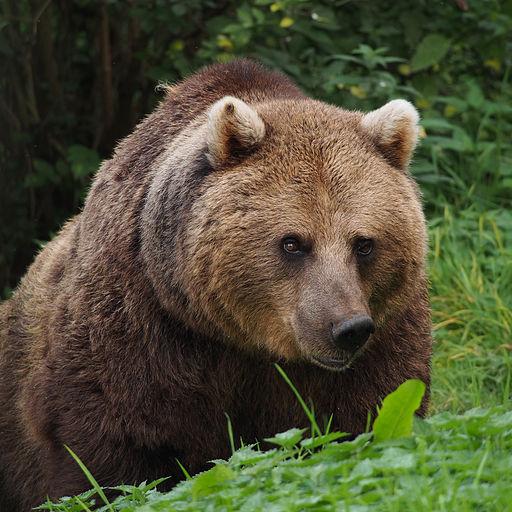 [:fi]Karhu[:en]Bear[:]